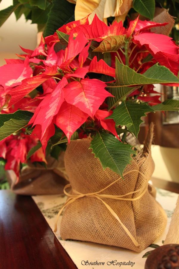 Pretty poinsettias for christmas southern hospitality for Decoracion de pascua