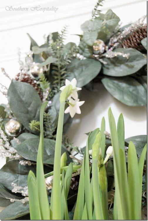 paperwhites bloom