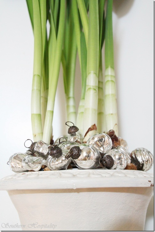 paperwhites with ornaments