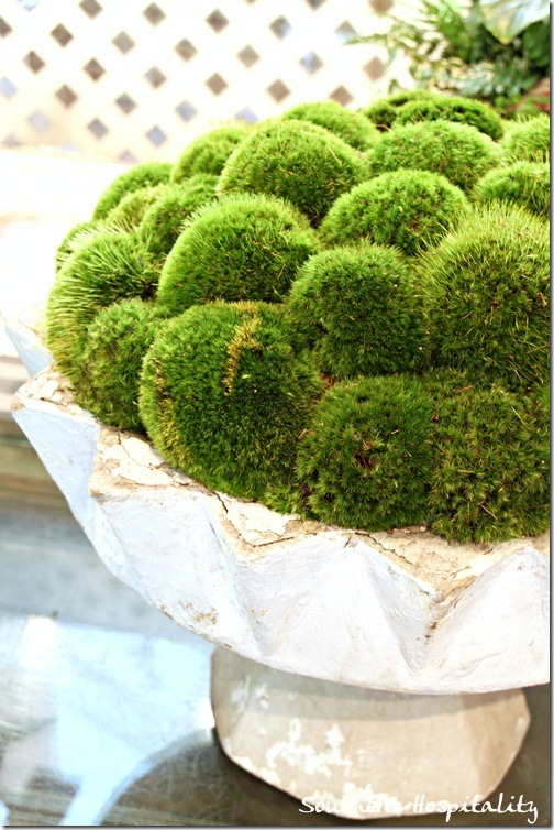 moss in white urn