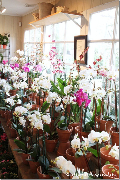 orchids in the window