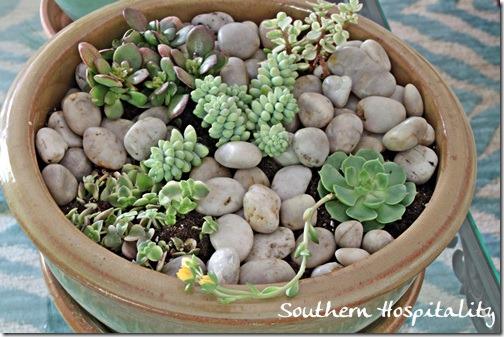 tabletop succulent garden