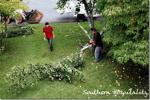 cherry tree cut