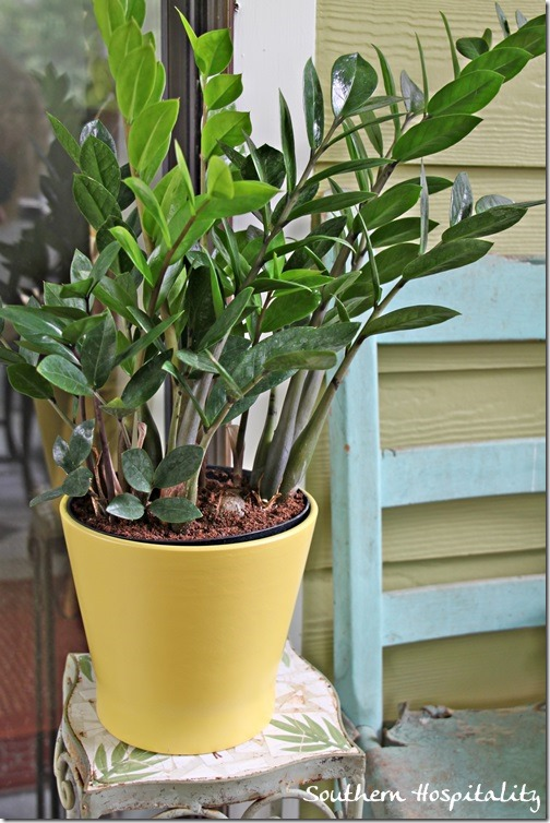 Clearance plants and vintage planters southern hospitality for Ikea plantes