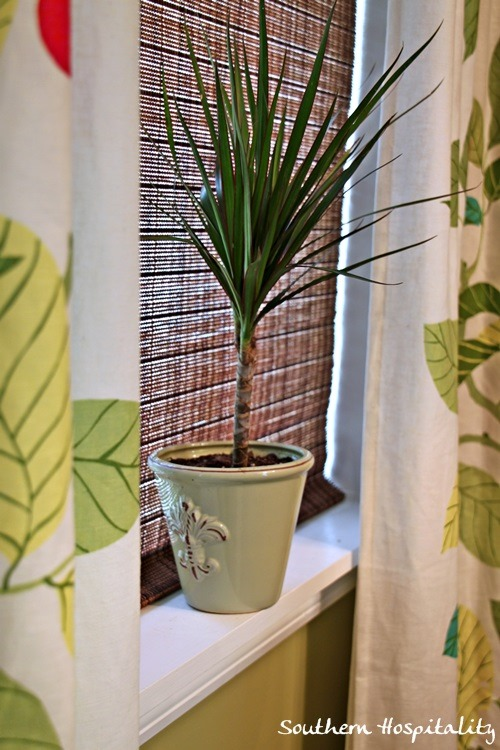 Clearance plants and vintage planters southern hospitality - Hardy office plants ...