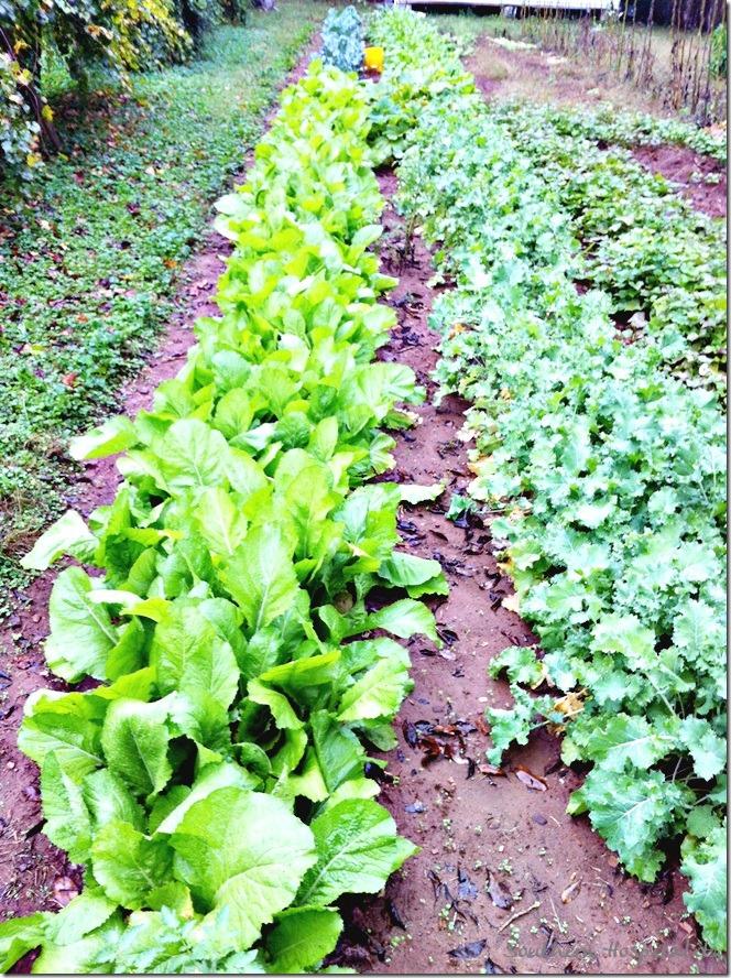 dad's greens garden