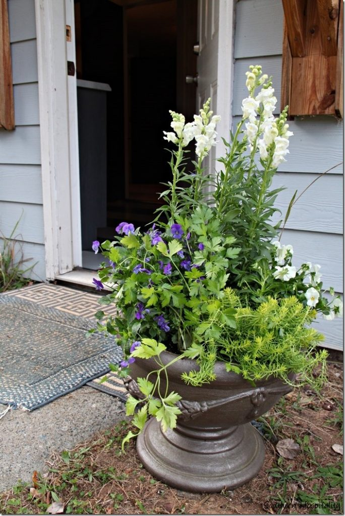 Southern Living Plant Collection : Planting Containers with Southern Living Plant Collection ...