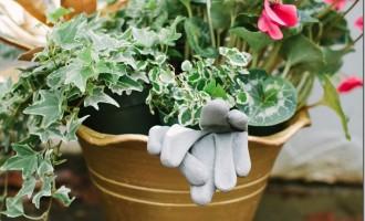 A Christmas Garden Party:  Gather and Grow
