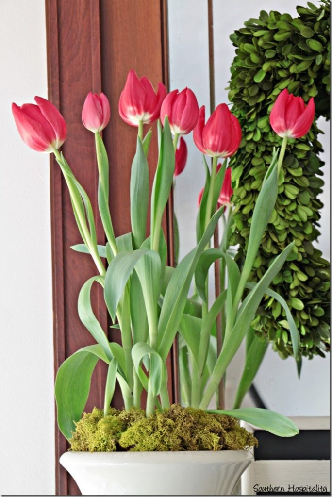 red tulips in urn