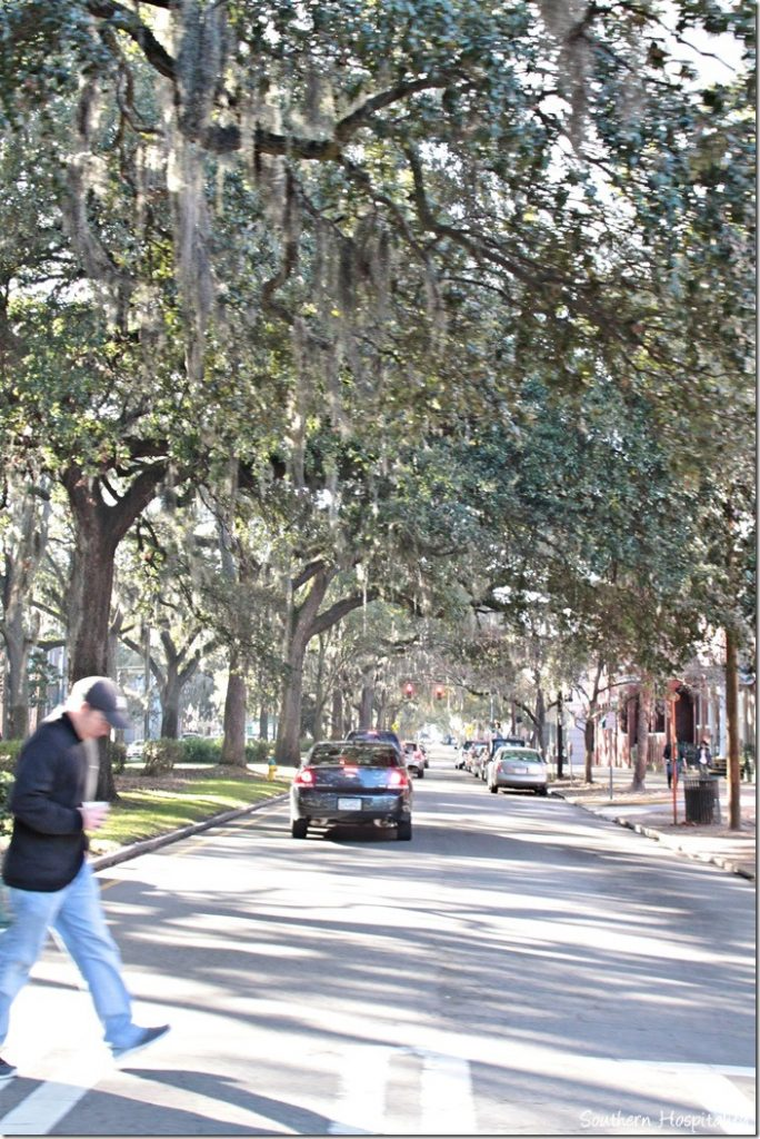 savannah moss draped trees and streets