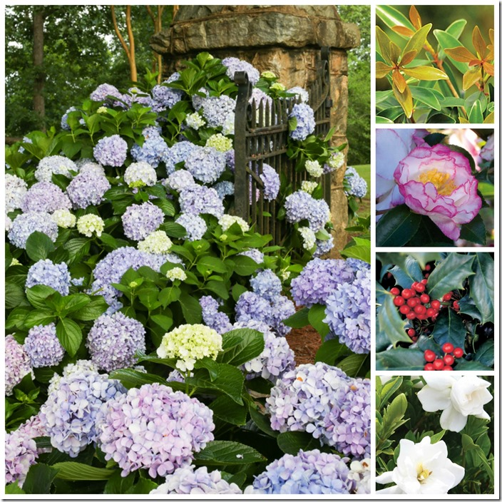 Southern Living Plant Collage