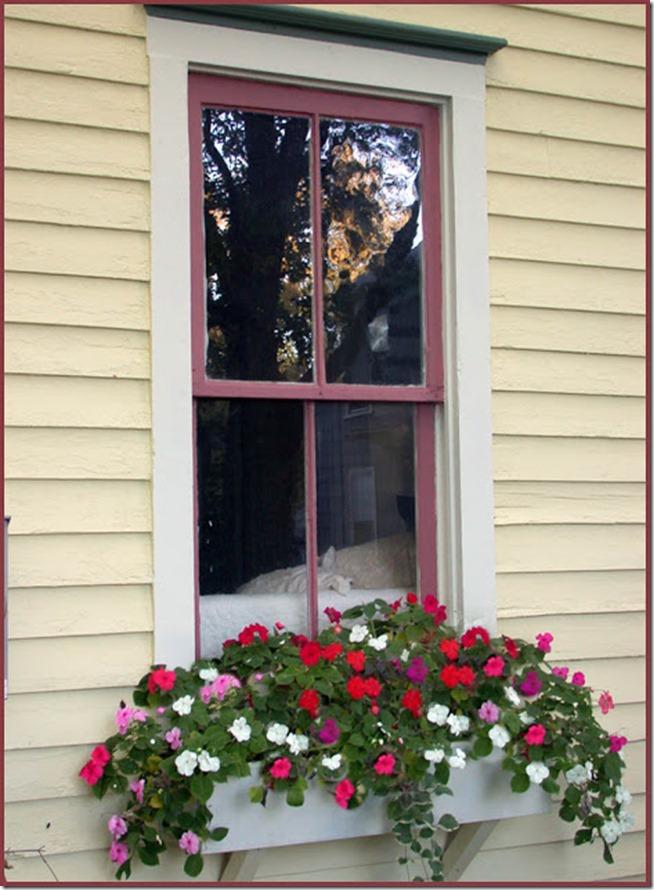 Window-Box