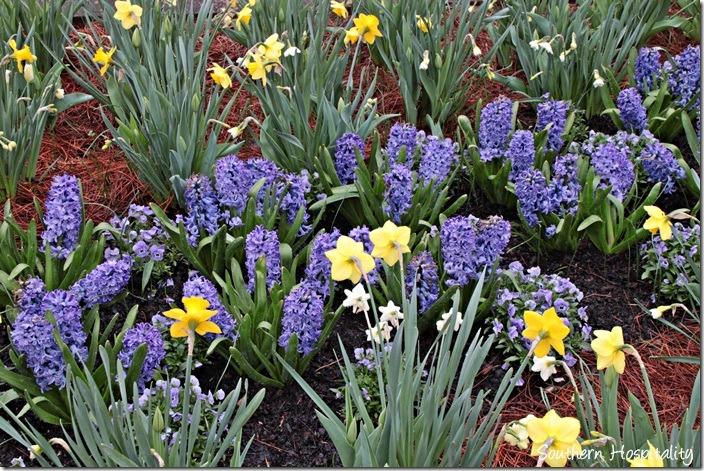 daffodils and hyacinth