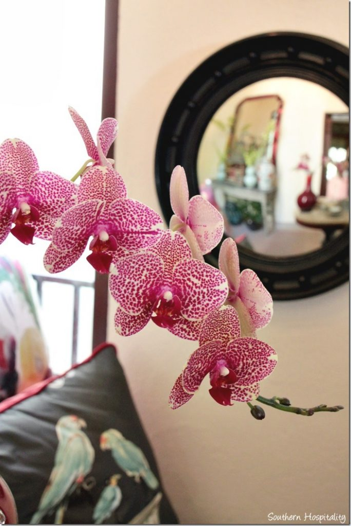 morning room orchid