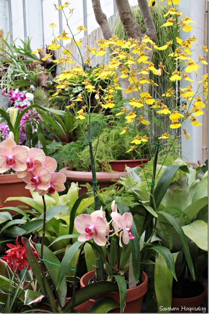 orchids in conservatory
