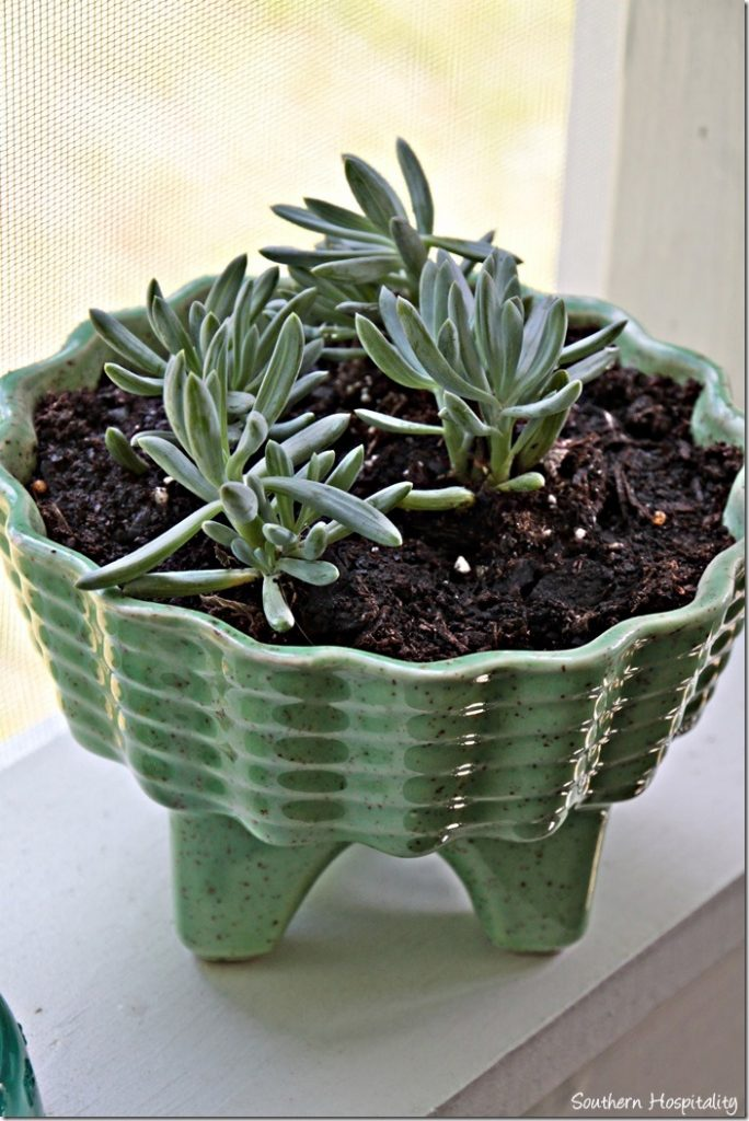 planter with succulents