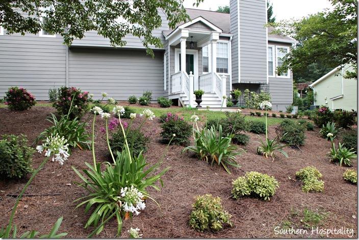 front yard landscape progress