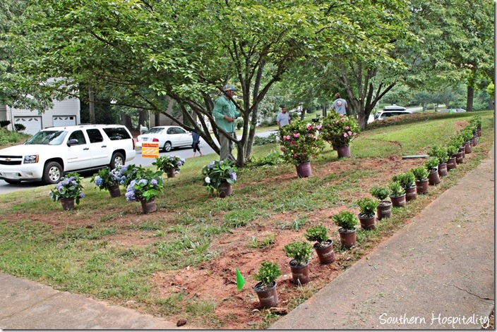 plants placed