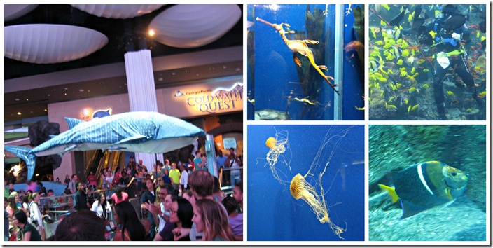 aquarium collage 4