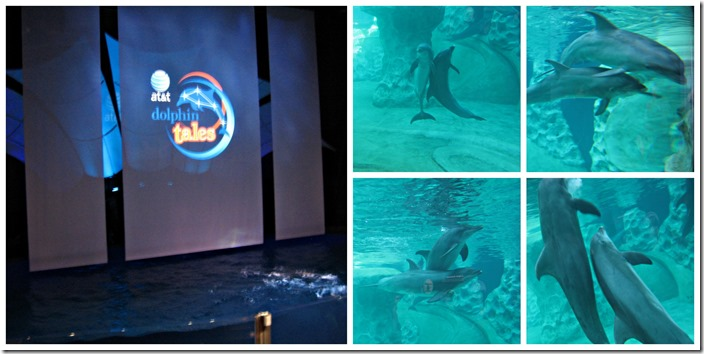 aquarium collage dolphin show