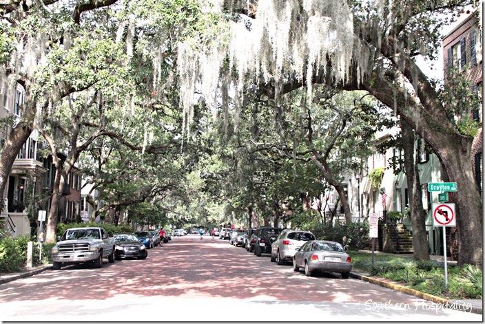 savannah tree lined street
