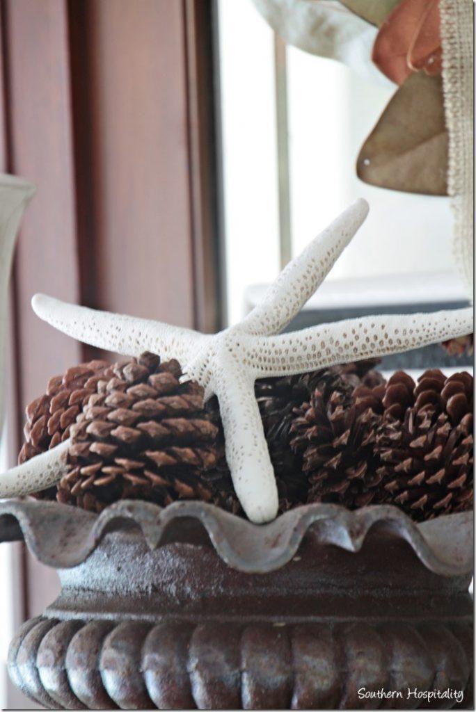 starfish and pinecones