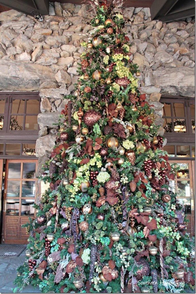 big tree at grove park inn
