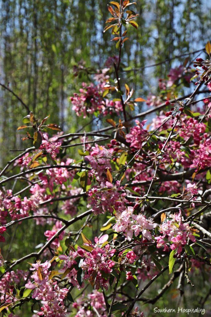 Gibbs Gardens069_036