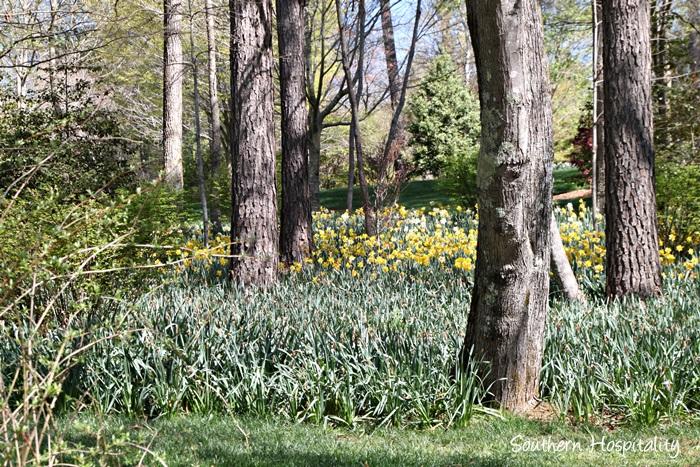 Gibbs Gardens088_054