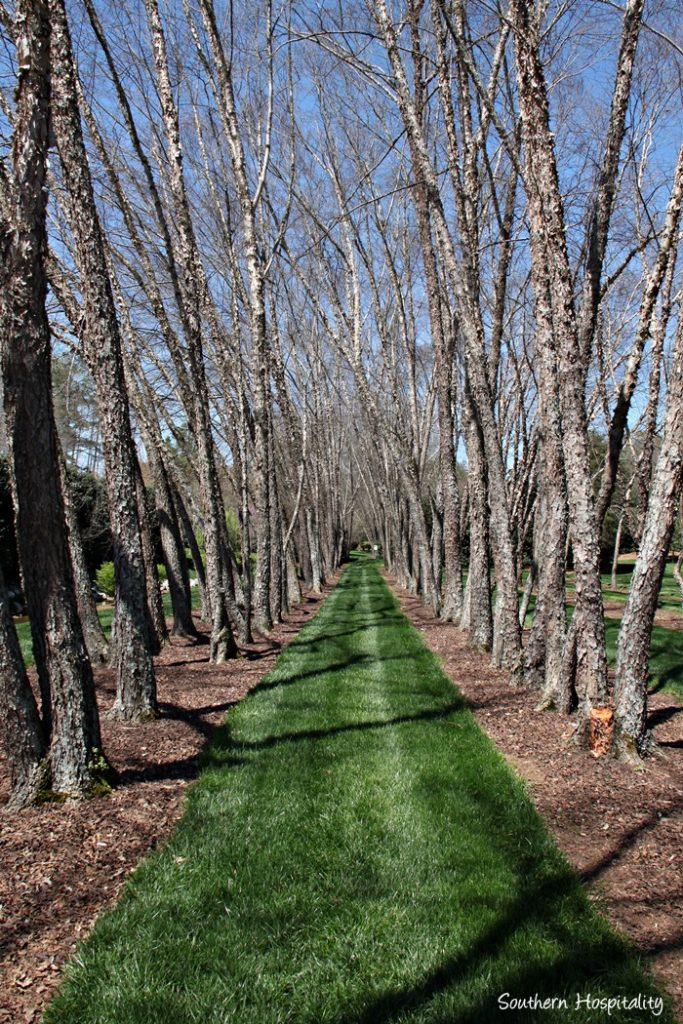 Gibbs Gardens146_091