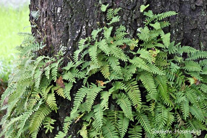 fern on trees