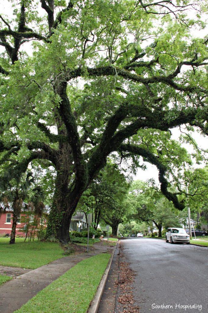 mobile oak lined street