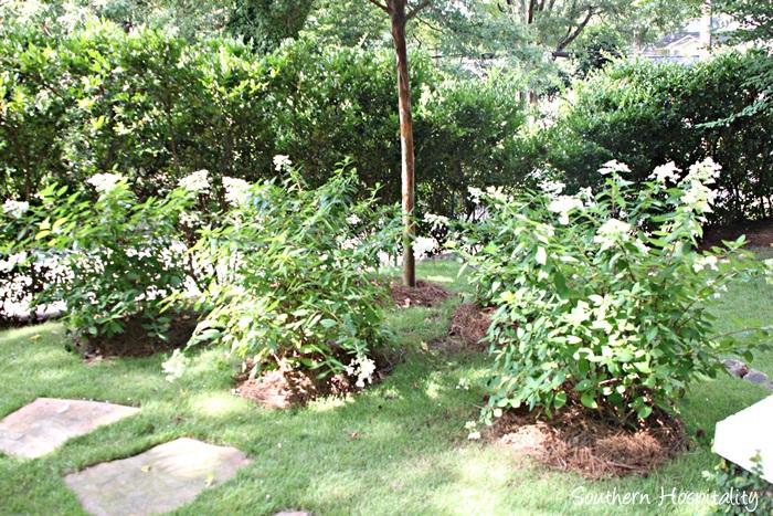 backyard paradise 027_20150723