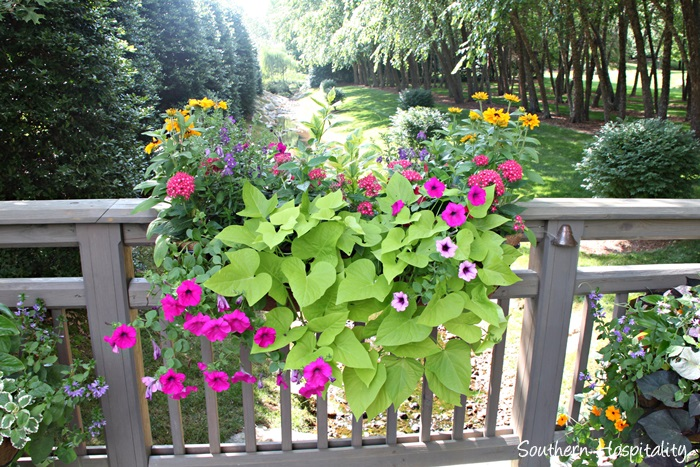 gibbs gardens019_20150625