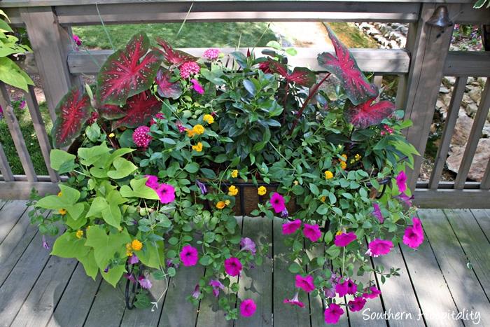 gibbs gardens023_20150625
