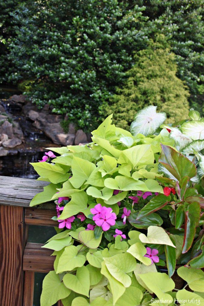 gibbs gardens028_20150625