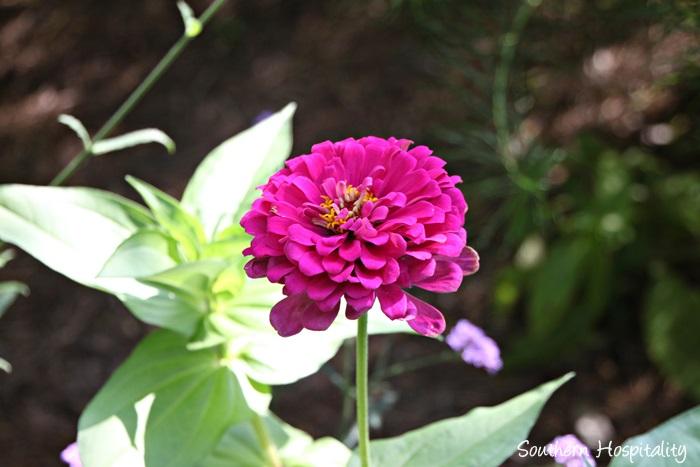 gibbs gardens030_20150625