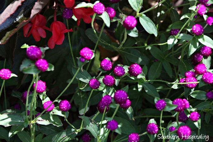 gibbs gardens032_20150625