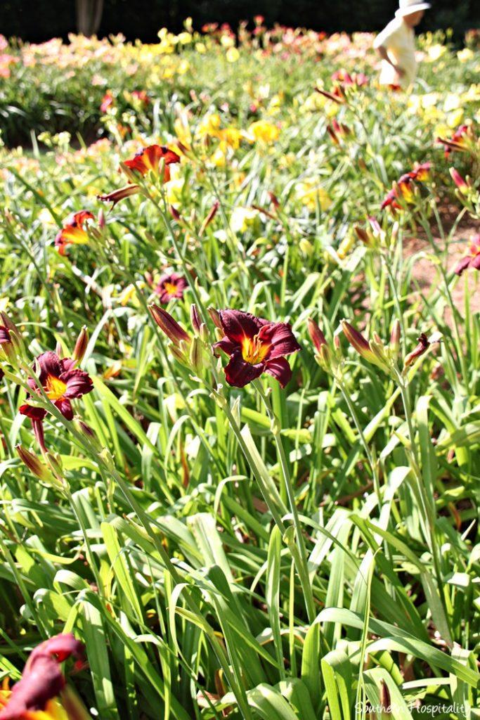 gibbs gardens038_20150625
