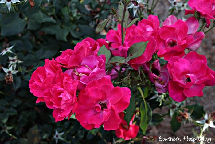 gibbs gardens049_20150625