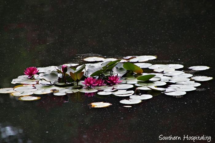 gibbs gardens058_20150625