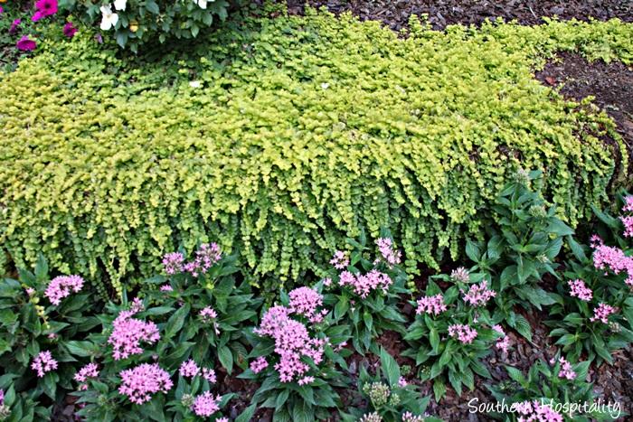 gibbs gardens078_20150625