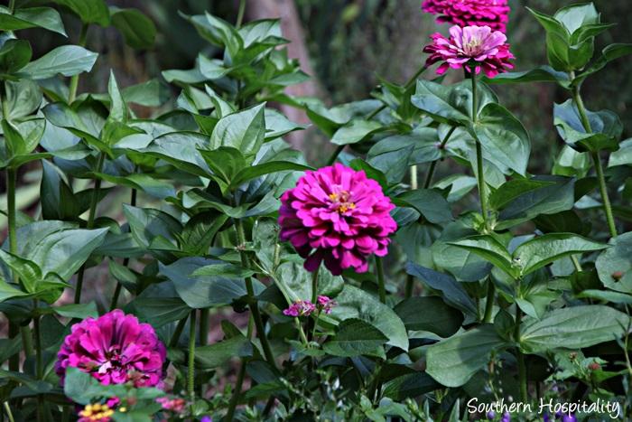 gibbs gardens080_20150625