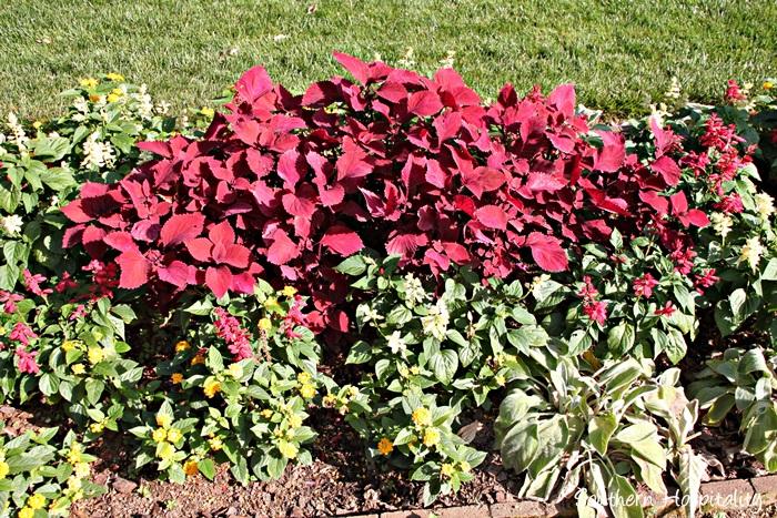 gibbs gardens087_20150625