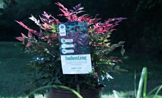 Southern Living Plants Additions
