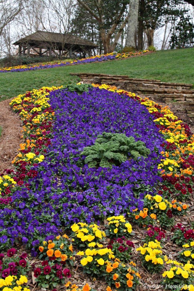 gibbs gardens daffodils025