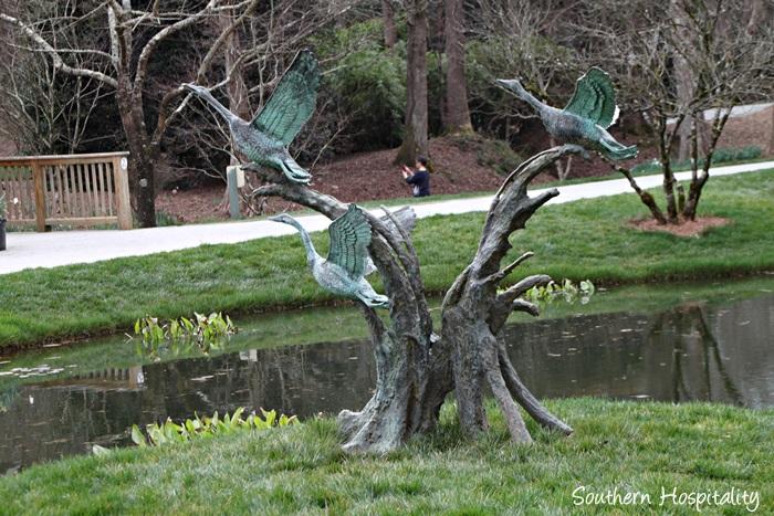 gibbs gardens daffodils038