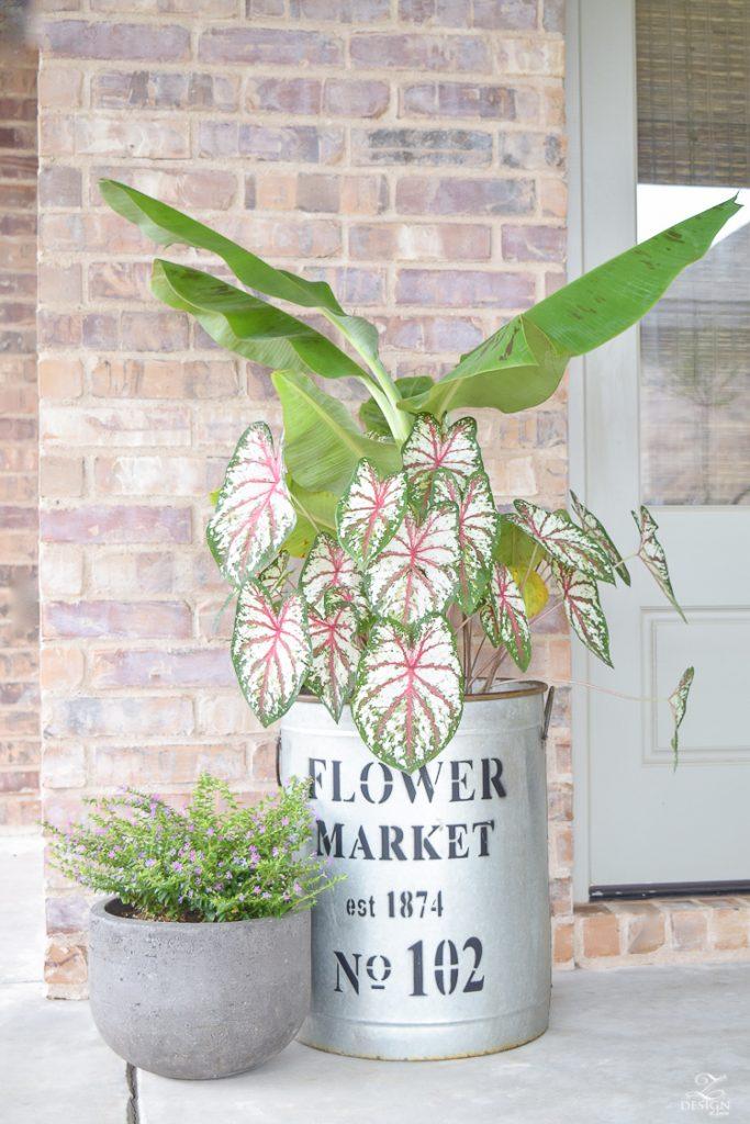 banana-plant-flower-market-pot