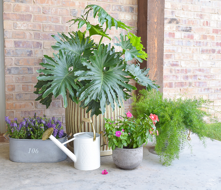 outdoor-plants-flowers-for-outdoor-entertaining-area