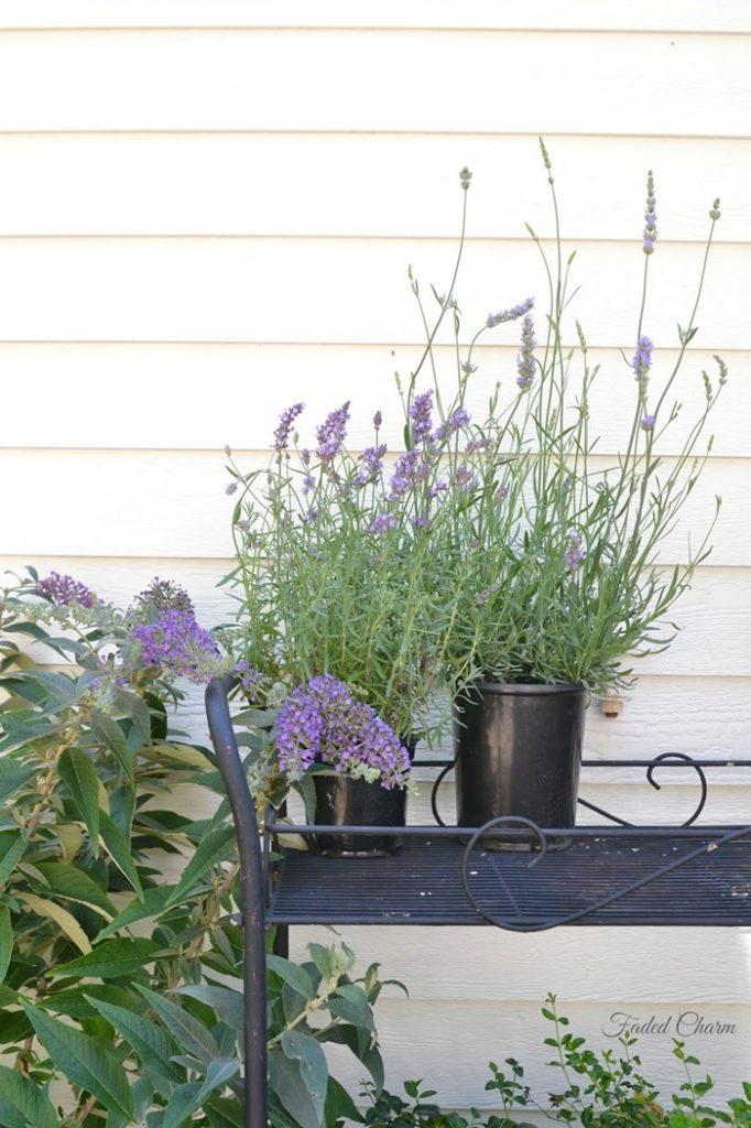 purple blooms 98